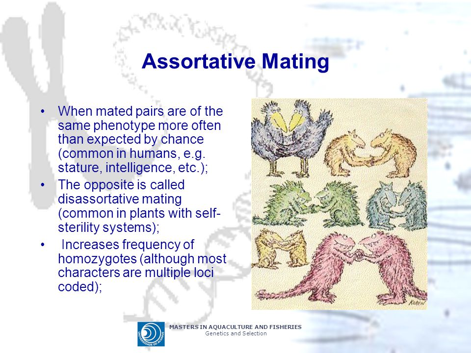 MASTERS IN AQUACULTURE AND FISHERIES Genetics and Selection Assortative Mating When mated pairs are of the same phenotype more often than expected by