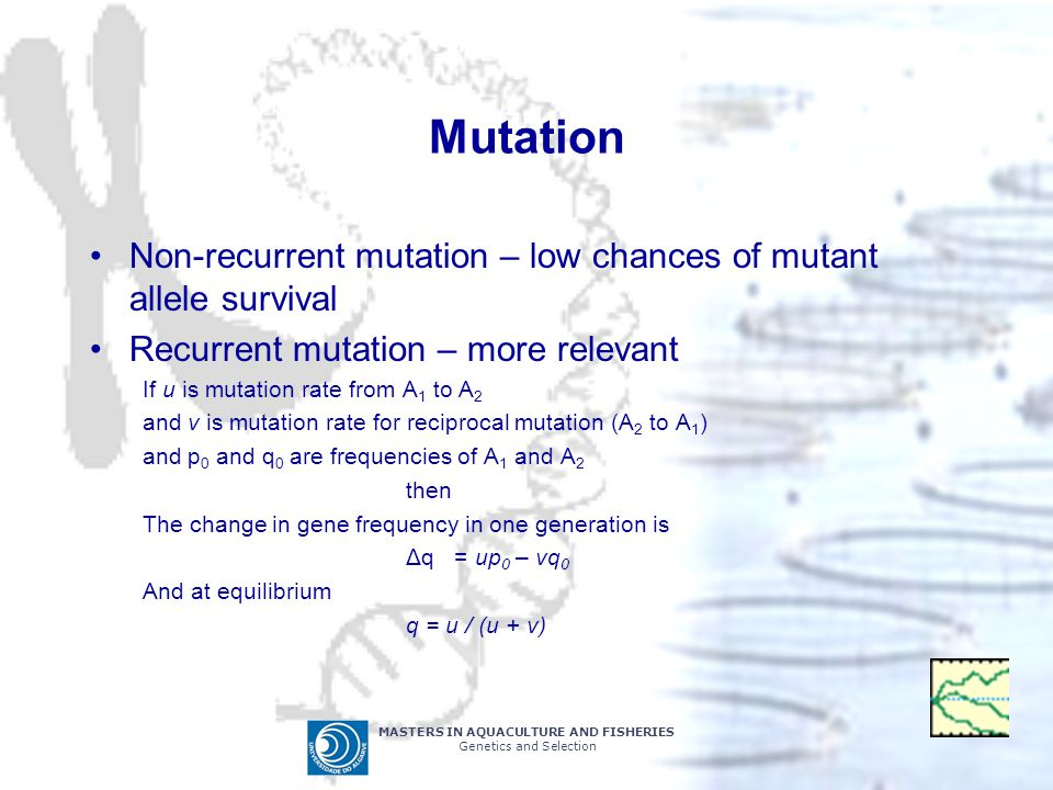 MASTERS IN AQUACULTURE AND FISHERIES Genetics and Selection Mutation Non-recurrent mutation – low chances of mutant allele survival Recurrent mutation