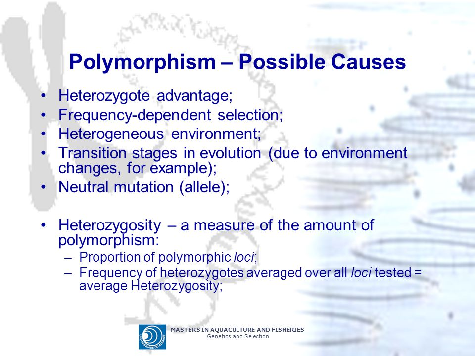 MASTERS IN AQUACULTURE AND FISHERIES Genetics and Selection Polymorphism – Possible Causes Heterozygote advantage; Frequency-dependent selection; Heterogeneous environment; Transition stages in evolution (due to environment changes, for example); Neutral mutation (allele); Heterozygosity – a measure of the amount of polymorphism: –Proportion of polymorphic loci; –Frequency of heterozygotes averaged over all loci tested = average Heterozygosity;