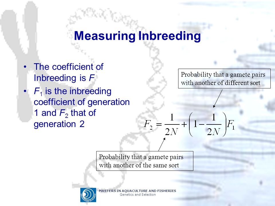 MASTERS IN AQUACULTURE AND FISHERIES Genetics and Selection Measuring Inbreeding The coefficient of Inbreeding is F F 1 is the inbreeding coefficient