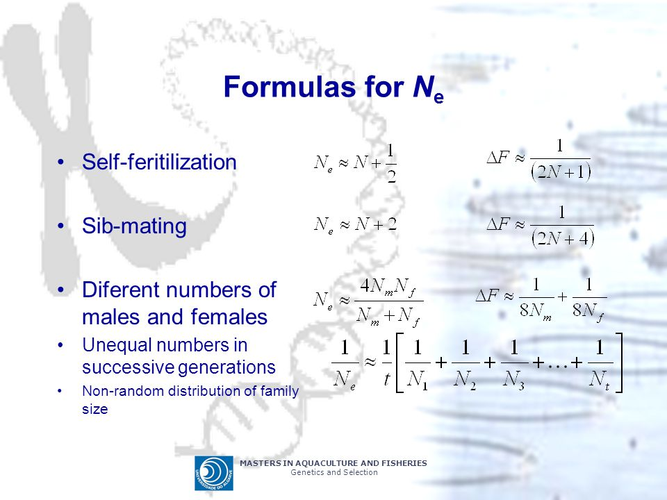 MASTERS IN AQUACULTURE AND FISHERIES Genetics and Selection Formulas for N e Self-feritilization Sib-mating Diferent numbers of males and females Uneq