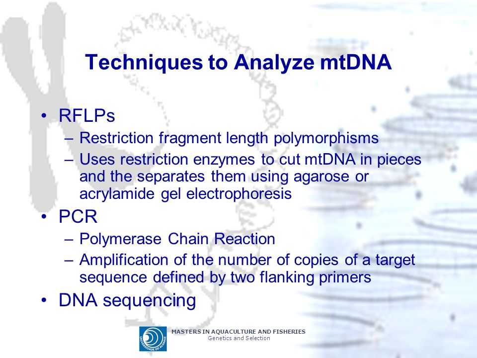 MASTERS IN AQUACULTURE AND FISHERIES Genetics and Selection Techniques to Analyze mtDNA RFLPs –Restriction fragment length polymorphisms –Uses restric