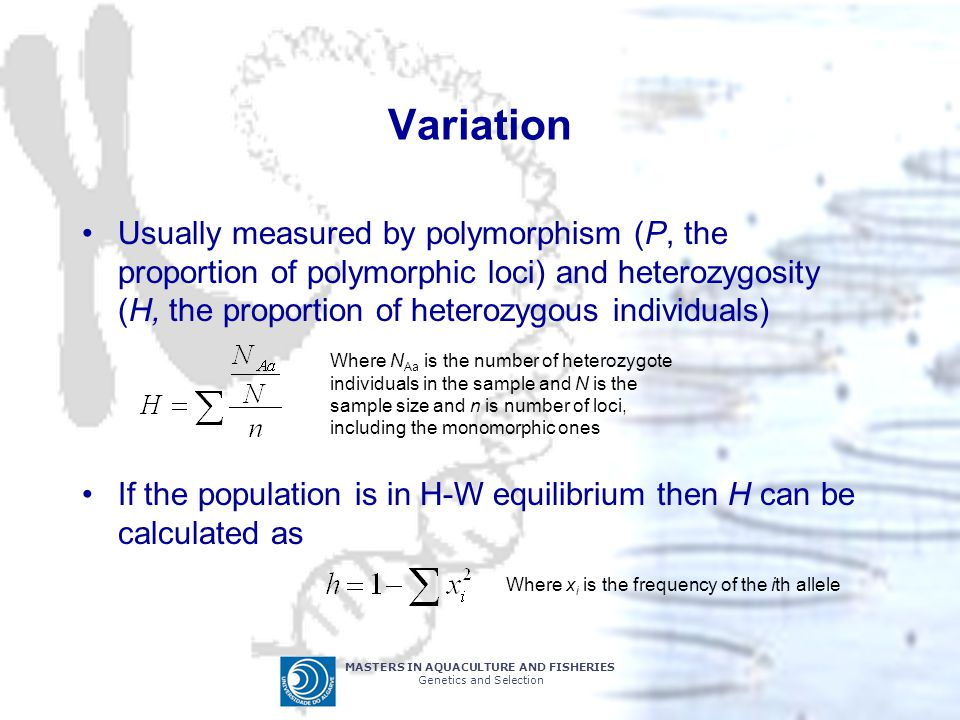MASTERS IN AQUACULTURE AND FISHERIES Genetics and Selection Variation Usually measured by polymorphism (P, the proportion of polymorphic loci) and heterozygosity (H, the proportion of heterozygous individuals) If the population is in H-W equilibrium then H can be calculated as Where N Aa is the number of heterozygote individuals in the sample and N is the sample size and n is number of loci, including the monomorphic ones Where x i is the frequency of the ith allele