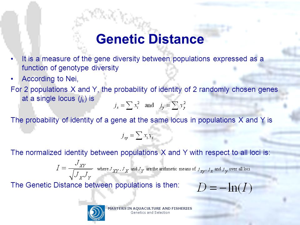 MASTERS IN AQUACULTURE AND FISHERIES Genetics and Selection Genetic Distance It is a measure of the gene diversity between populations expressed as a function of genotype diversity According to Nei, For 2 populations X and Y, the probability of identity of 2 randomly chosen genes at a single locus (j k ) is The probability of identity of a gene at the same locus in populations X and Y is The normalized identity between populations X and Y with respect to all loci is: The Genetic Distance between populations is then: