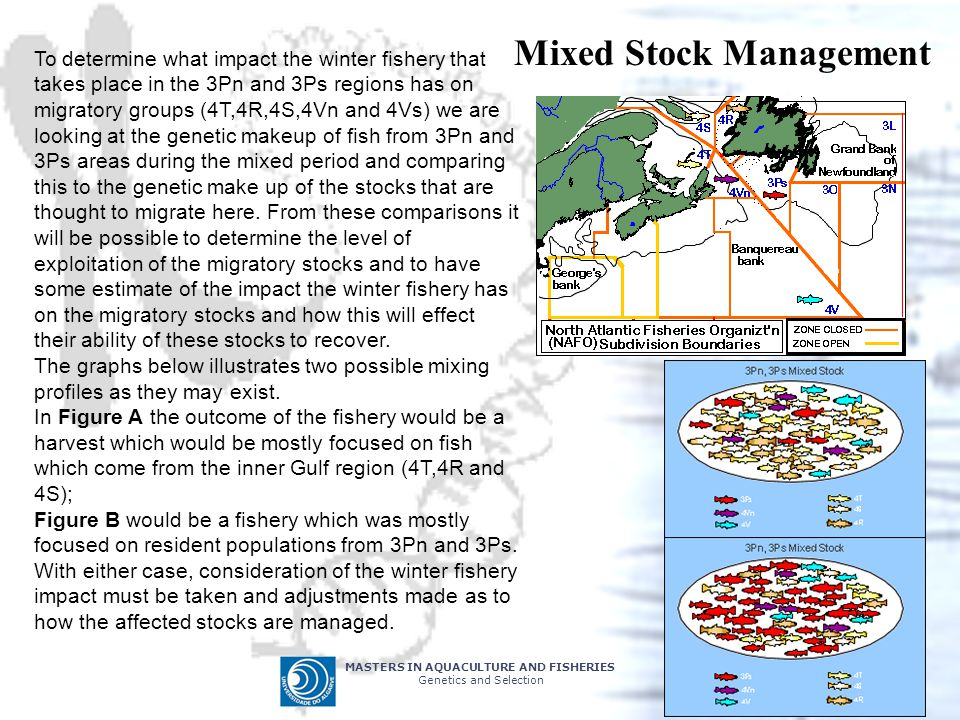 MASTERS IN AQUACULTURE AND FISHERIES Genetics and Selection Mixed Stock Management To determine what impact the winter fishery that takes place in the 3Pn and 3Ps regions has on migratory groups (4T,4R,4S,4Vn and 4Vs) we are looking at the genetic makeup of fish from 3Pn and 3Ps areas during the mixed period and comparing this to the genetic make up of the stocks that are thought to migrate here.