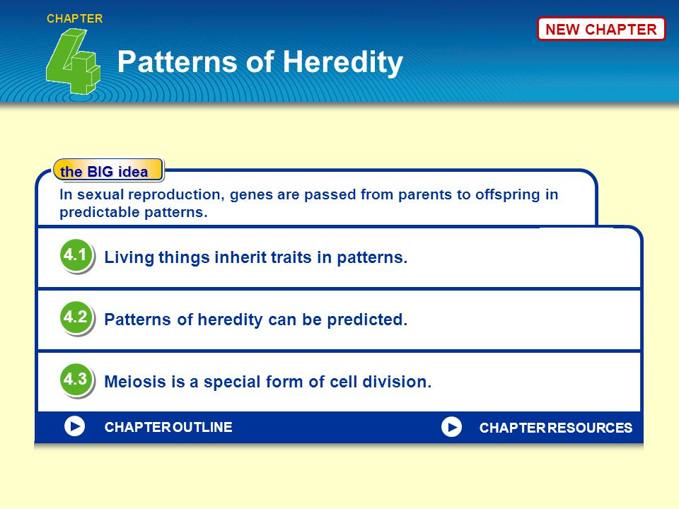Patterns of Heredity CHAPTER the BIG idea CHAPTER OUTLINE In sexual reproduction, genes are passed from parents to offspring in predictable patterns.