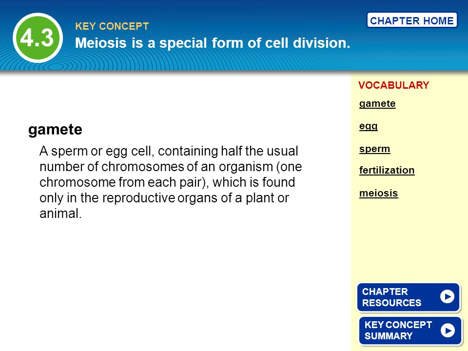 VOCABULARY KEY CONCEPT CHAPTER HOME A sperm or egg cell, containing half the usual number of chromosomes of an organism (one chromosome from each pair