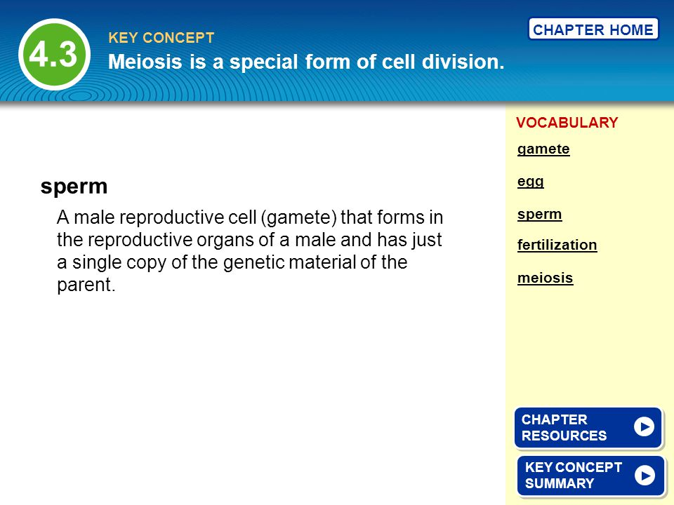 VOCABULARY KEY CONCEPT CHAPTER HOME A male reproductive cell (gamete) that forms in the reproductive organs of a male and has just a single copy of th
