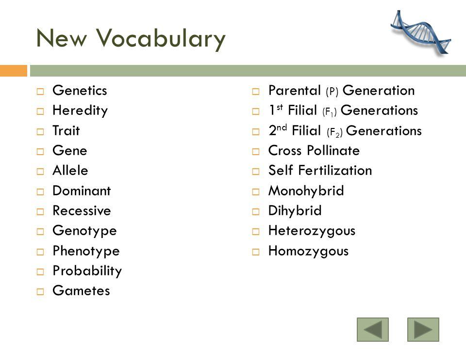 New Vocabulary  Genetics  Heredity  Trait  Gene  Allele  Dominant  Recessive  Genotype  Phenotype  Probability  Gametes  Parental (P) Generation  1 st Filial (F 1 ) Generations  2 nd Filial (F 2 ) Generations  Cross Pollinate  Self Fertilization  Monohybrid  Dihybrid  Heterozygous  Homozygous