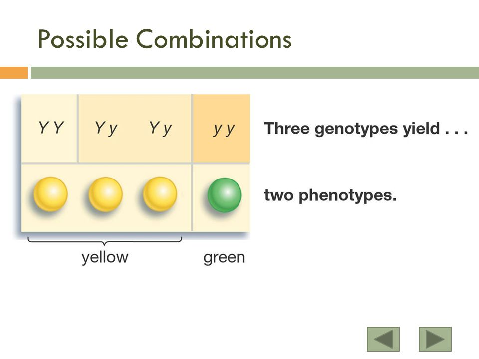 Possible Combinations