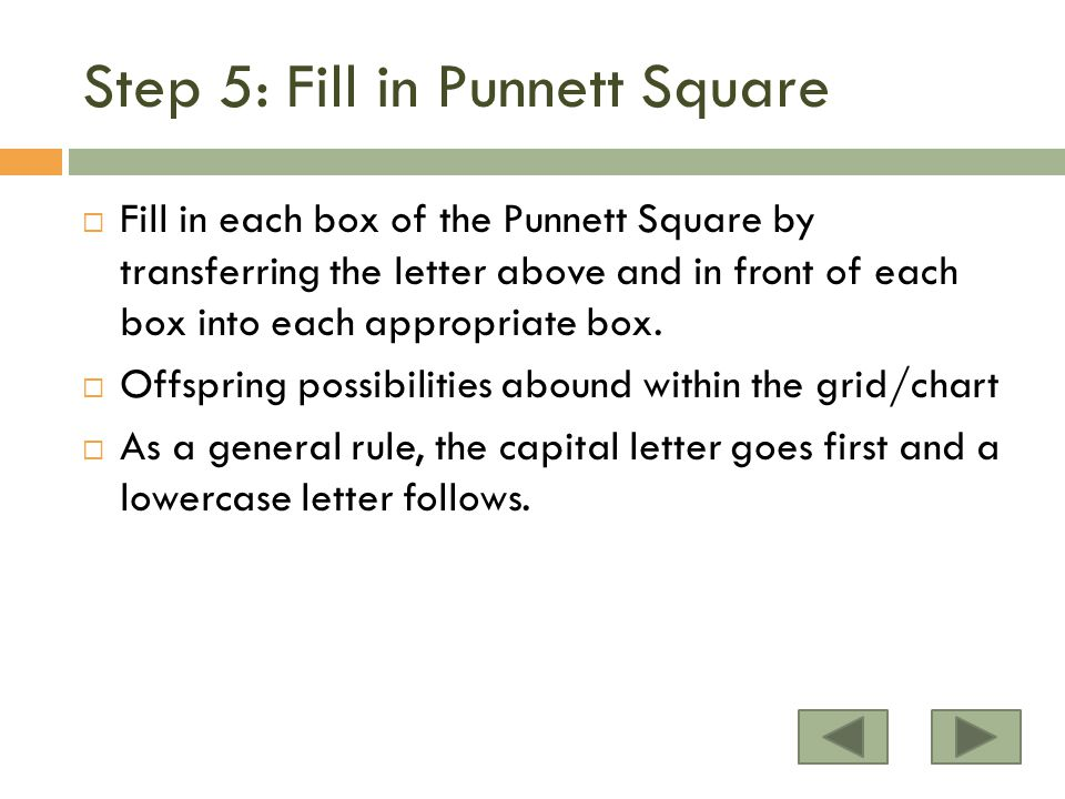 Step 5: Fill in Punnett Square  Fill in each box of the Punnett Square by transferring the letter above and in front of each box into each appropriate box.