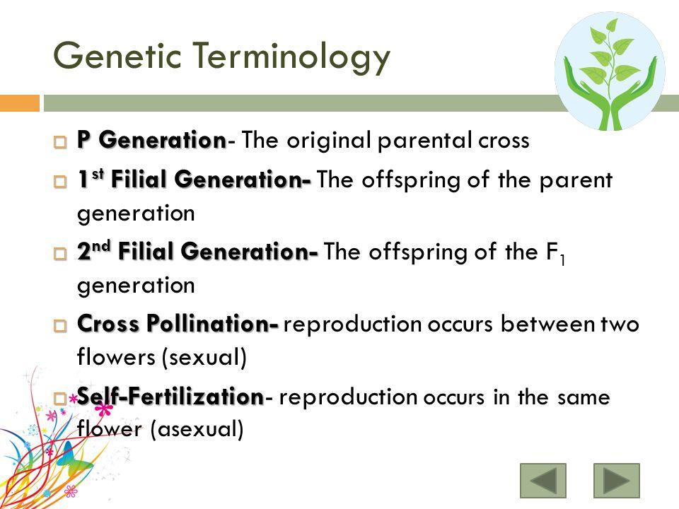 Genetic Terminology  P Generation  P Generation- The original parental cross  1 st Filial Generation-  1 st Filial Generation- The offspring of the parent generation  2 nd Filial Generation-  2 nd Filial Generation- The offspring of the F 1 generation  Cross Pollination-  Cross Pollination- reproduction occurs between two flowers (sexual)  Self-Fertilization  Self-Fertilization- reproduction occurs in the same flower (asexual)