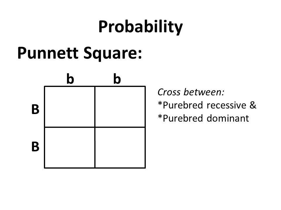 Probability Punnett Square: bb B B Cross between: *Purebred recessive & *Purebred dominant