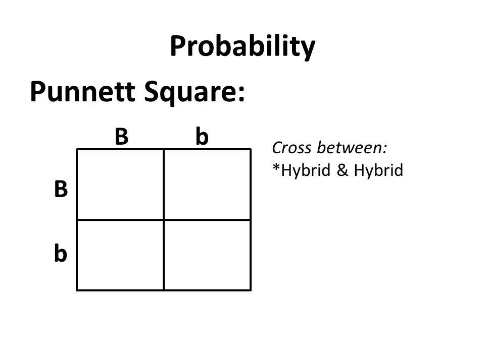 Probability Punnett Square: bB b B Cross between: *Hybrid & Hybrid