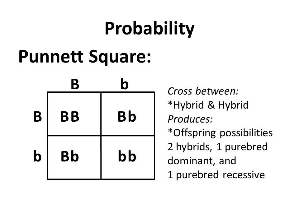Probability Punnett Square: bB b B Cross between: *Hybrid & Hybrid Produces: *Offspring possibilities 2 hybrids, 1 purebred dominant, and 1 purebred recessive B b B B B b b b
