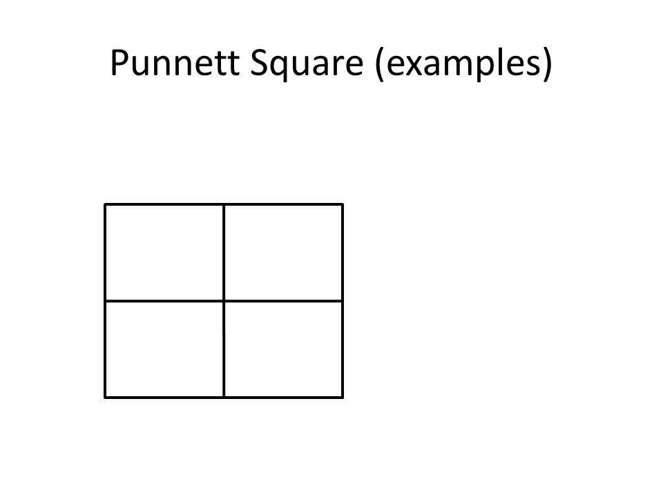 Punnett Square (examples)