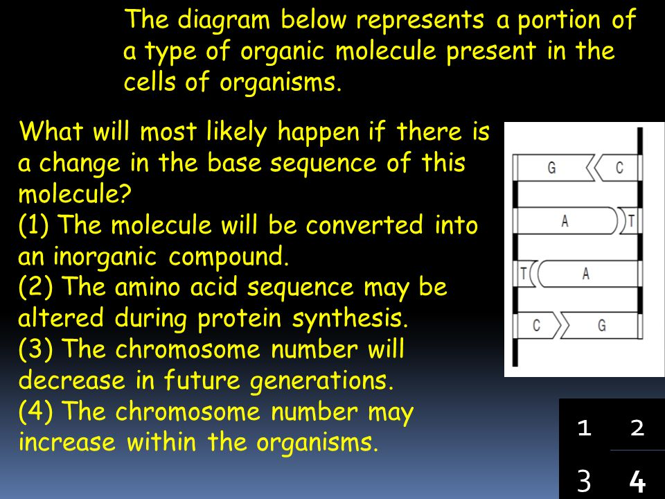 The largest amount of DNA in a plant cell is contained in (1) a nucleus (2) a chromosome (3) a protein molecule (4) an enzyme molecule 43 1 2