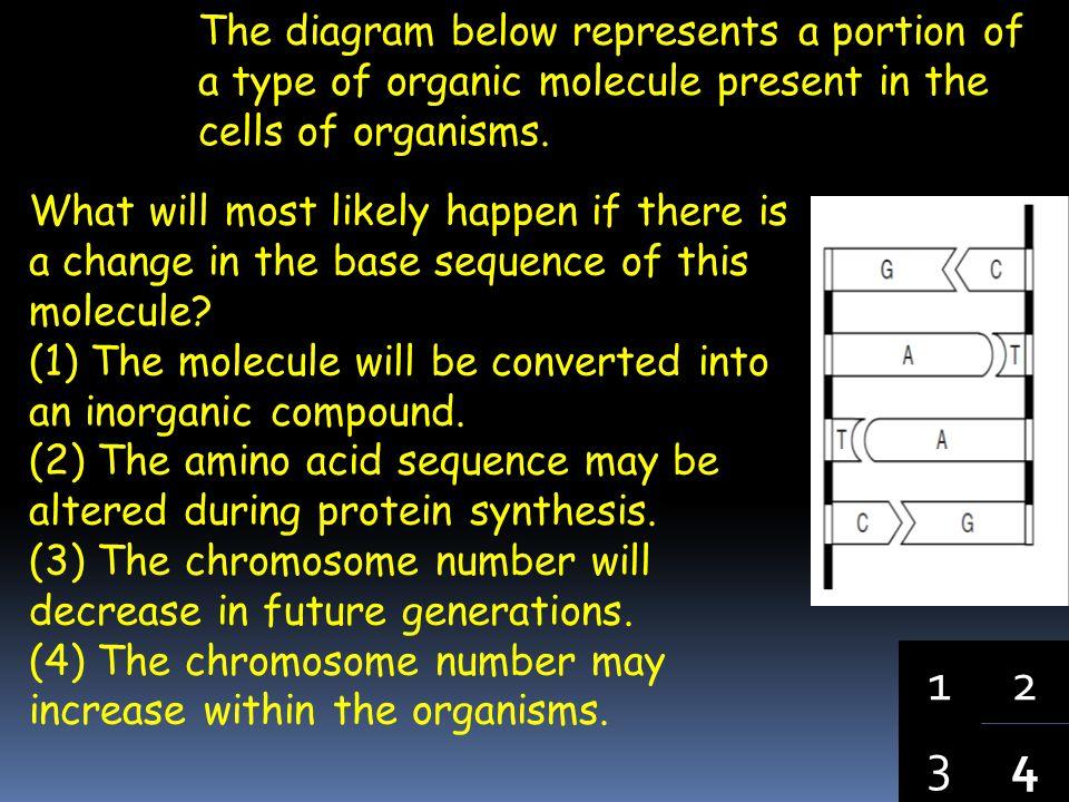 4 3 1 2 The type of molecule represented below is found in organisms.