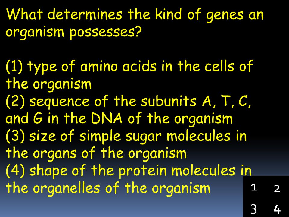 4 3 1 2 The sequence of subunits in a protein is most directly dependent on the (1) region in the cell where enzymes are produced (2) DNA in the chrom