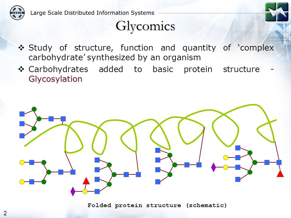 2 Glycomics  Study of structure, function and quantity of 'complex carbohydrate' synthesized by an organism Glycosylation  Carbohydrates added to basic protein structure - Glycosylation Folded protein structure (schematic)