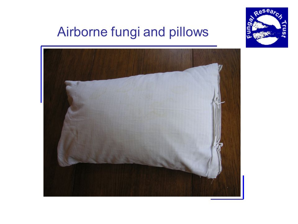 Airborne fungi and pillows