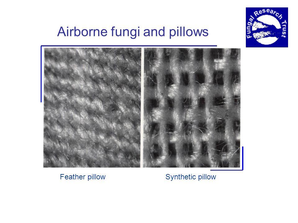 Feather pillowSynthetic pillow