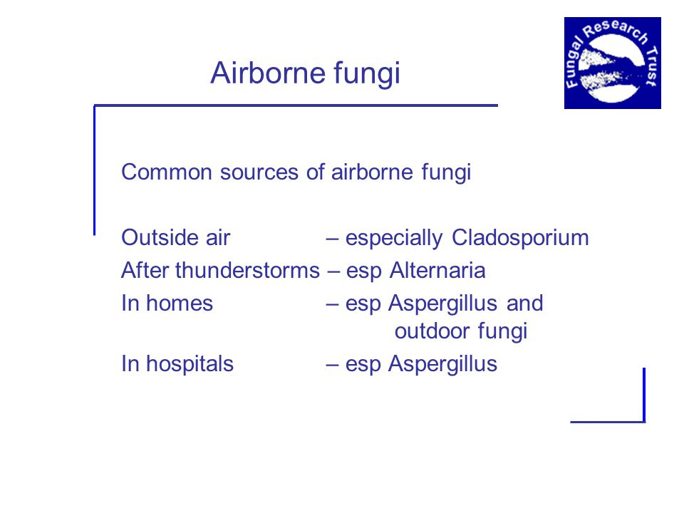 Airborne fungi Common sources of airborne fungi Outside air – especially Cladosporium After thunderstorms – esp Alternaria In homes – esp Aspergillus and outdoor fungi In hospitals – esp Aspergillus
