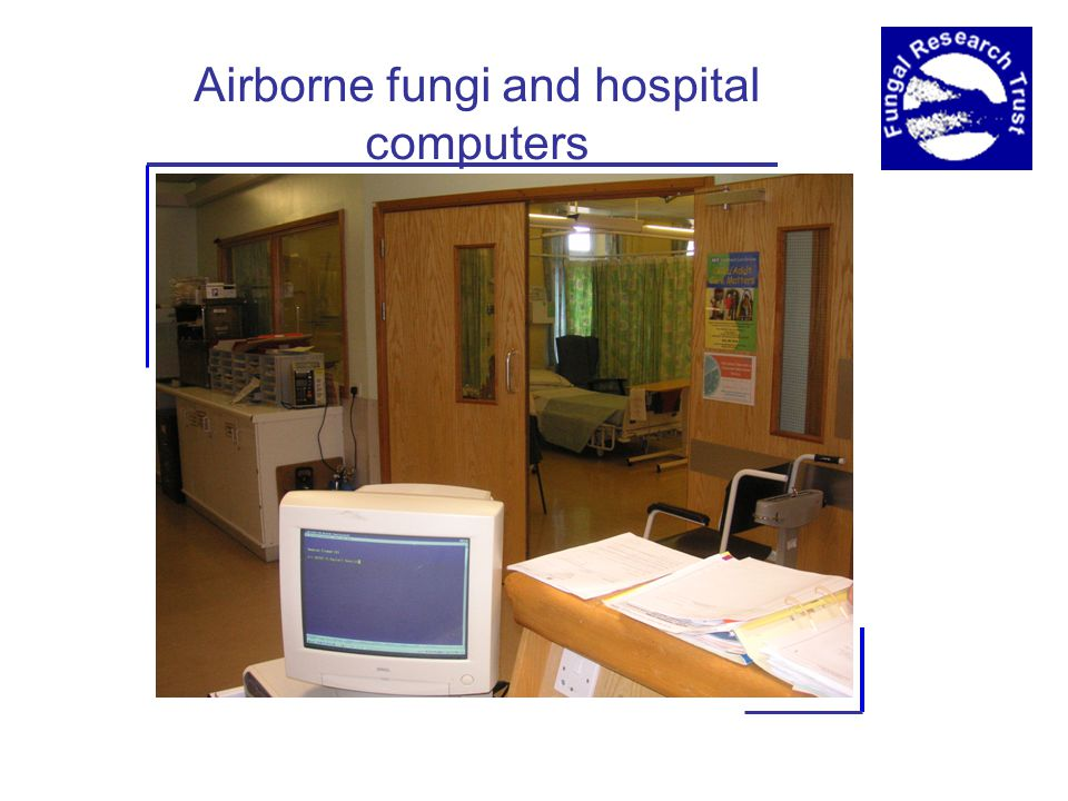 Airborne fungi and hospital computers
