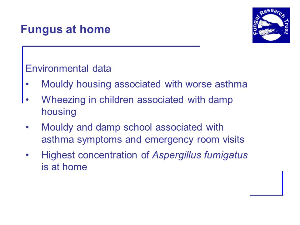 Fungus at home Environmental data Mouldy housing associated with worse asthma Wheezing in children associated with damp housing Mouldy and damp school associated with asthma symptoms and emergency room visits Highest concentration of Aspergillus fumigatus is at home
