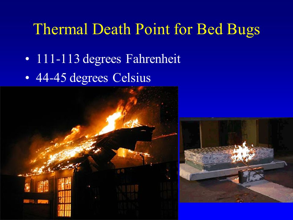 Thermal Death Point for Bed Bugs 111-113 degrees Fahrenheit 44-45 degrees Celsius
