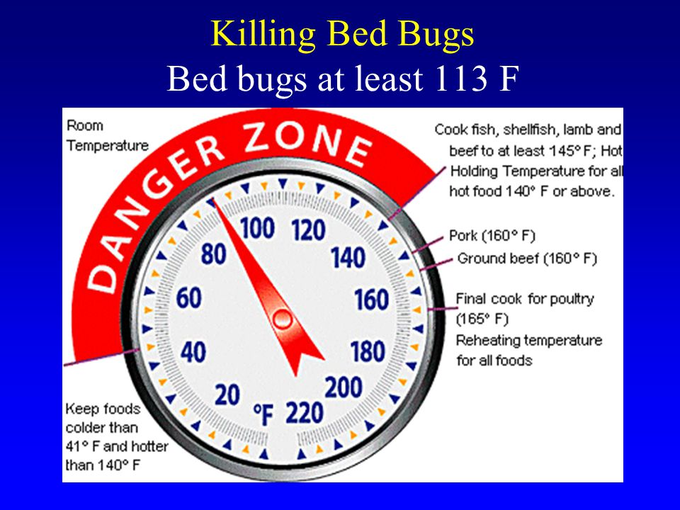 Killing Bed Bugs Bed bugs at least 113 F