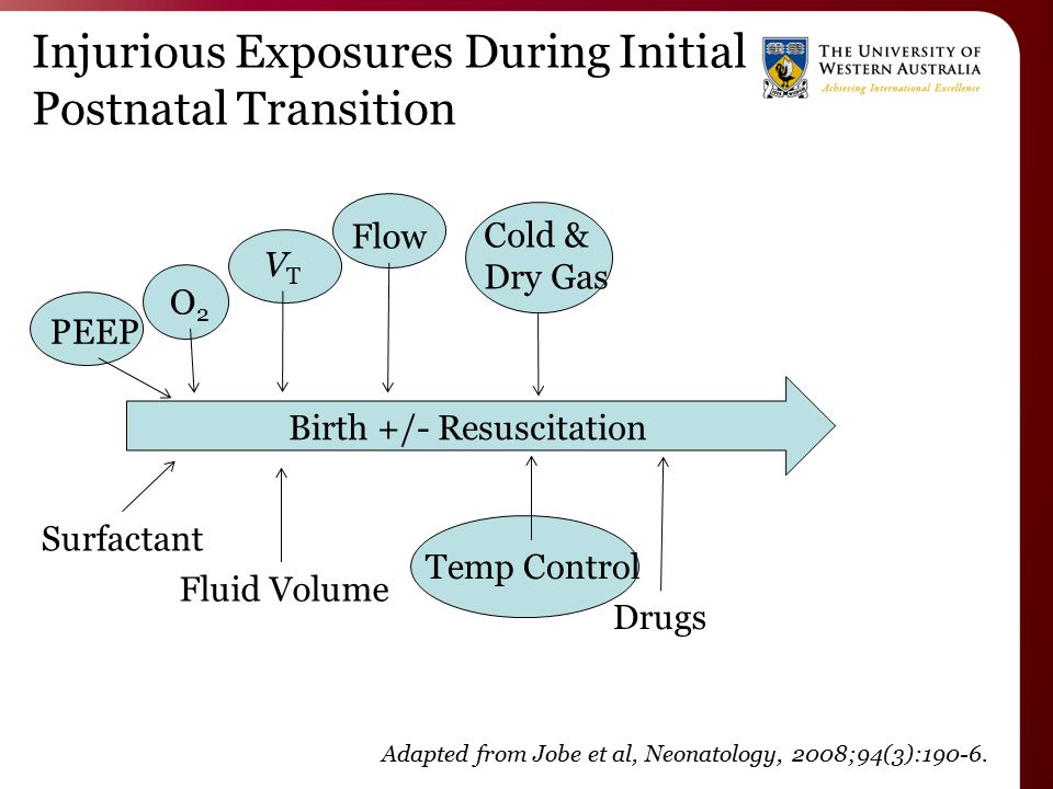 Injurious Exposures During Initial Postnatal Transition Birth +/- Resuscitation Adapted from Jobe et al, Neonatology, 2008;94(3):190-6.