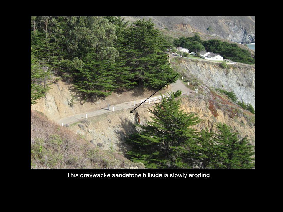 This graywacke sandstone hillside is slowly eroding.
