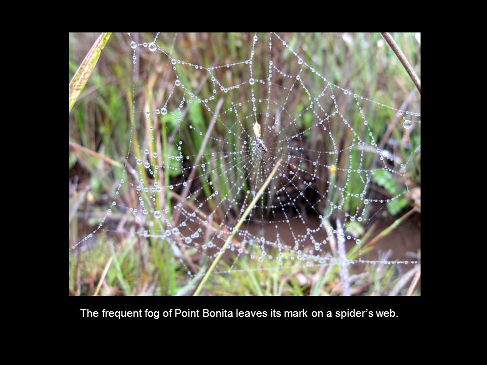 The frequent fog of Point Bonita leaves its mark on a spider's web.