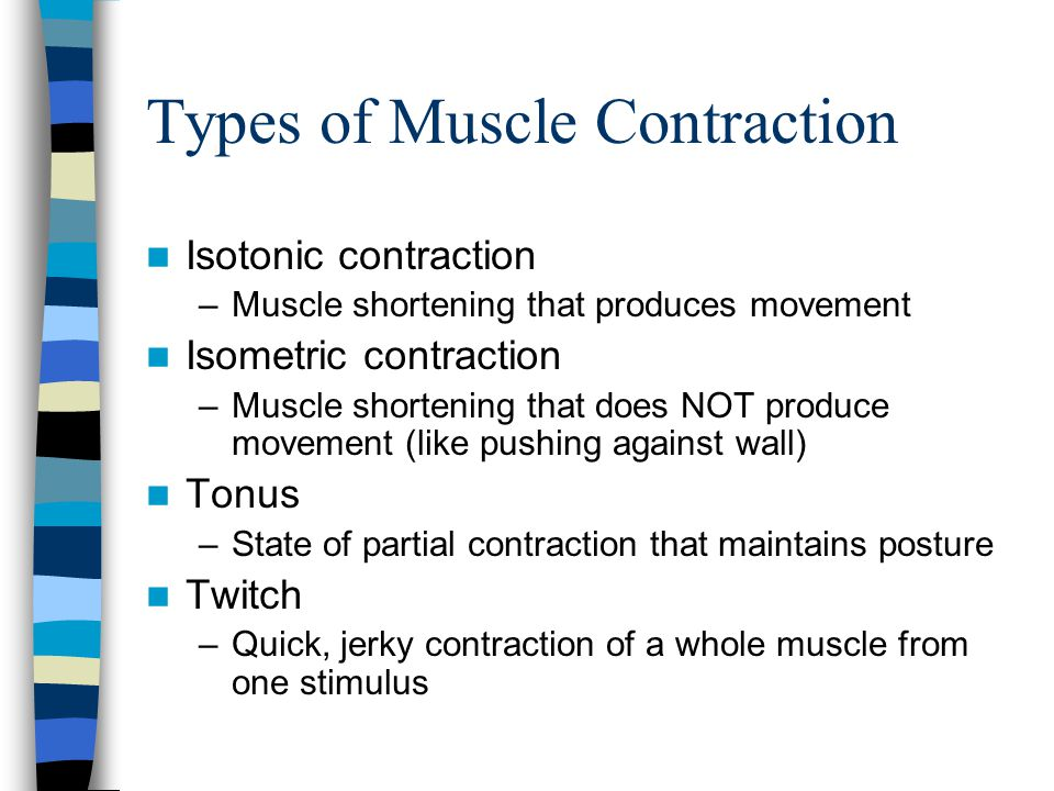 Types of Muscle Contraction Isotonic contraction –Muscle shortening that produces movement Isometric contraction –Muscle shortening that does NOT prod