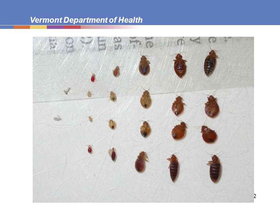Vermont Department of Health 12