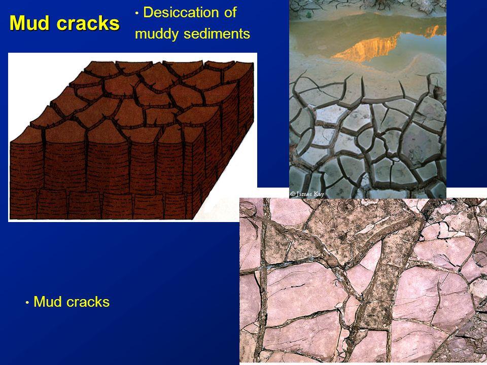 Mud cracks 5 cm Mud cracks Desiccation of muddy sediments