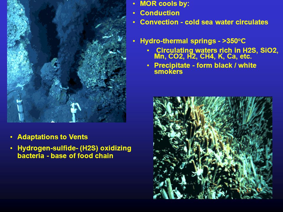 Components: Oceanic plate Trench Fore-arc ridge (melange) Fore-arc basin Continental plate with volcanic mountain range (e.g.