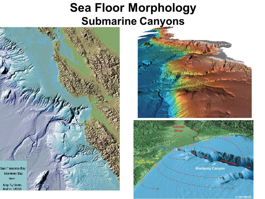Sea Floor Morphology Submarine Canyons