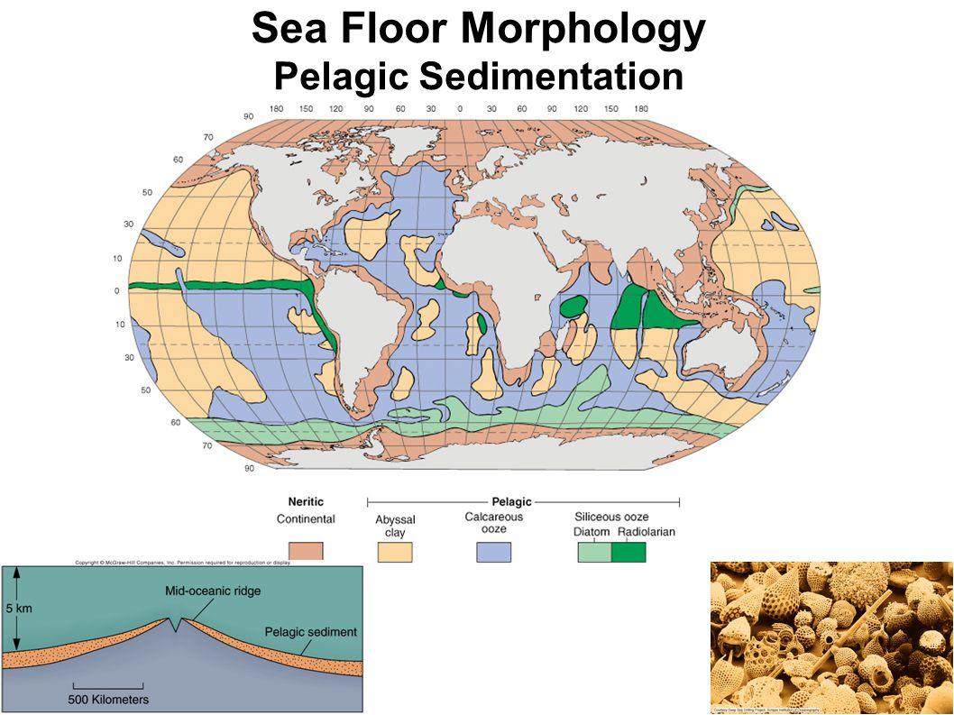Sea Floor Morphology Pelagic Sedimentation