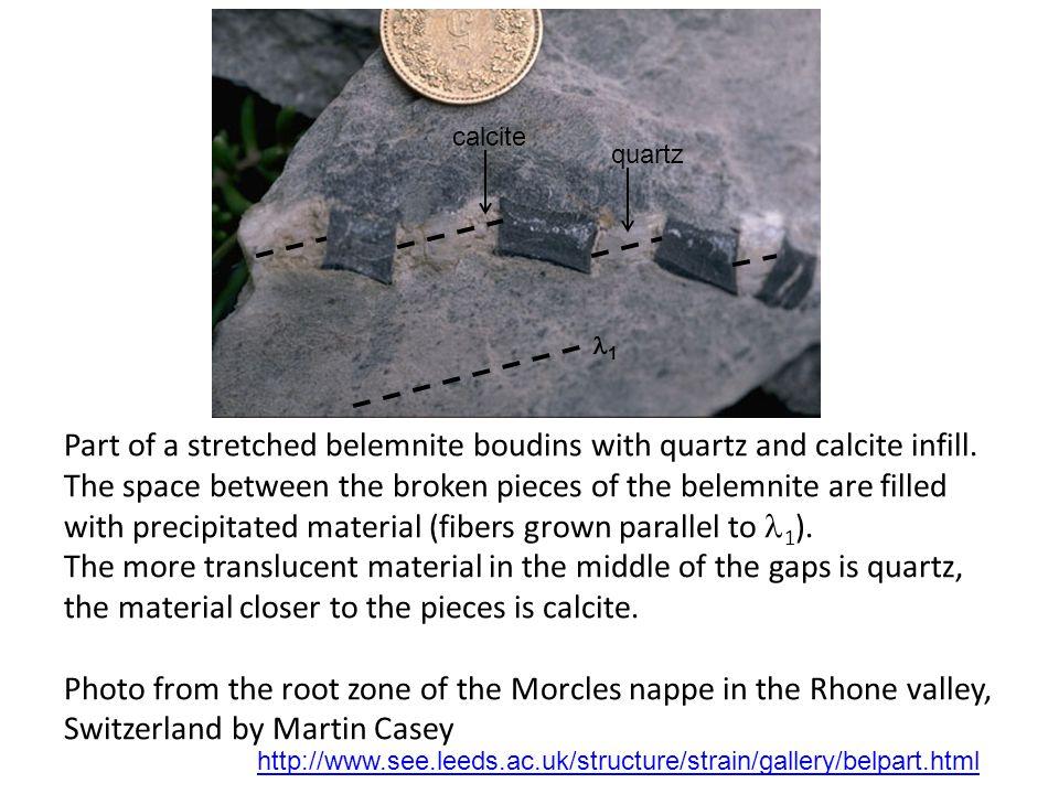 Elongated belemnites in Jurassic limestone in the Swiss Alps.