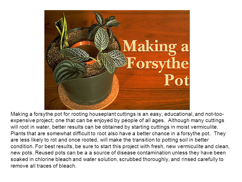 Making a forsythe pot for rooting houseplant cuttings is an easy, educational, and not-too- expensive project; one that can be enjoyed by people of all ages.
