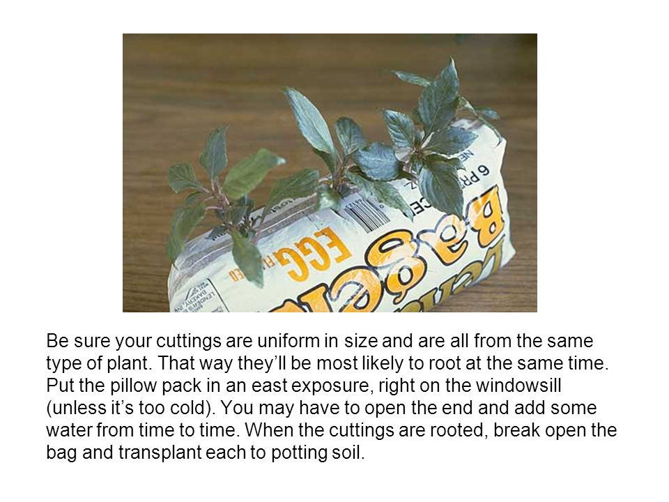 Be sure your cuttings are uniform in size and are all from the same type of plant.