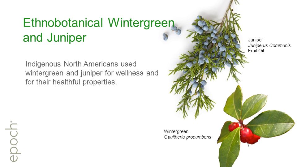 Ethnobotanical Wintergreen and Juniper Indigenous North Americans used wintergreen and juniper for wellness and for their healthful properties.