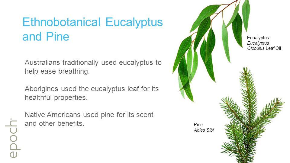Ethnobotanical Eucalyptus and Pine Australians traditionally used eucalyptus to help ease breathing.
