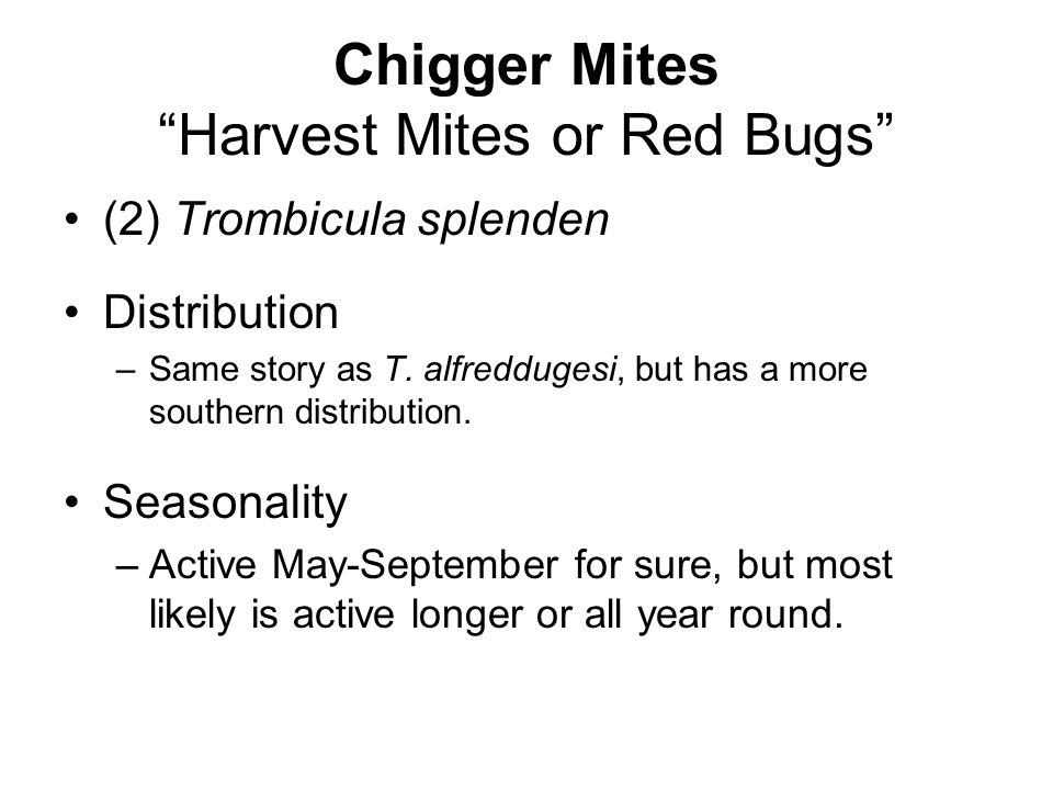 Chigger Mites Harvest Mites or Red Bugs (2) Trombicula splenden Distribution –Same story as T.