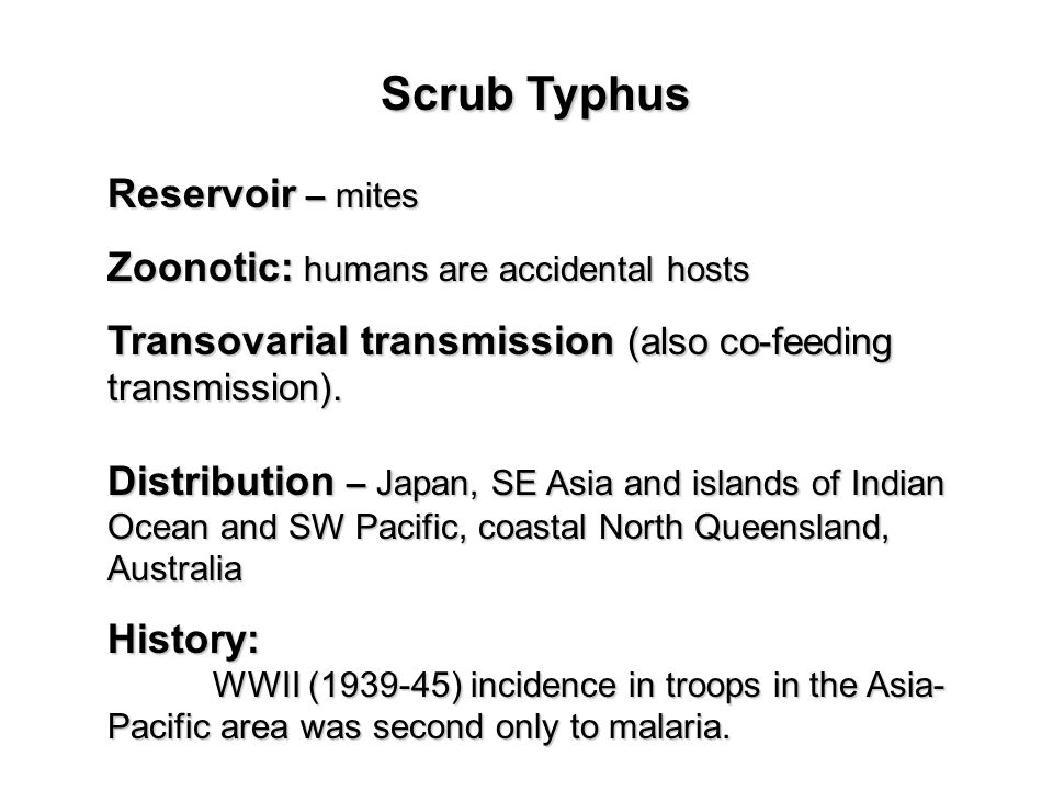 Scrub Typhus Reservoir – mites Zoonotic: humans are accidental hosts Transovarial transmission (also co-feeding transmission).