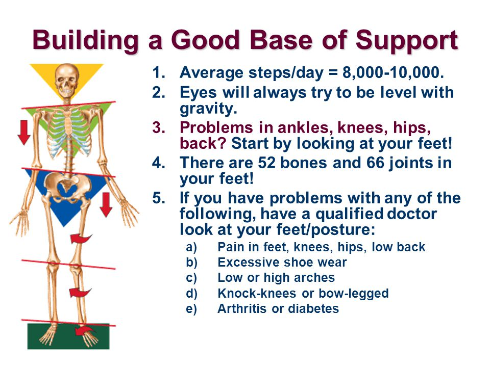 Building a Good Base of Support 1.Average steps/day = 8,000-10,000. 2.Eyes will always try to be level with gravity. 3.Problems in ankles, knees, hips