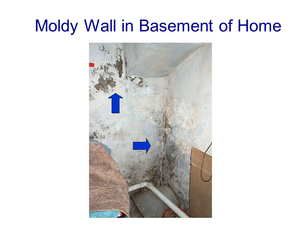 Moldy Wall in Basement of Home