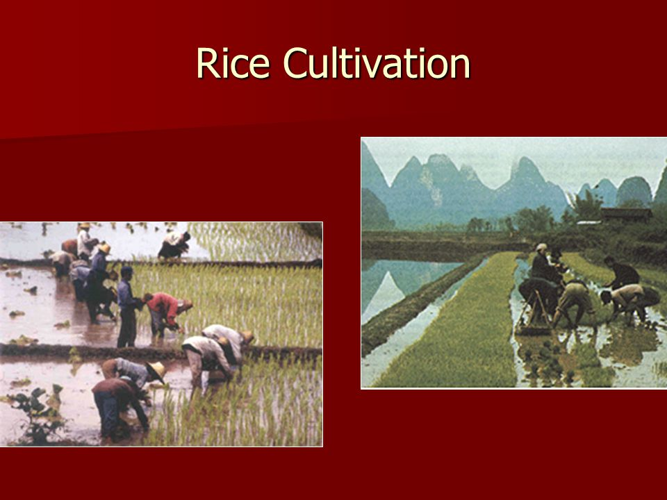The Song Agricultural Revolution The conquest of the Northern Song by the Jurchens in 1127 led to a southward migration by the Chinese to below the Ya